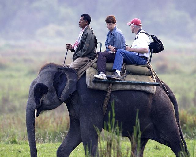 not ride an elephant