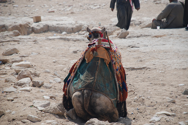 Tips for camel riding