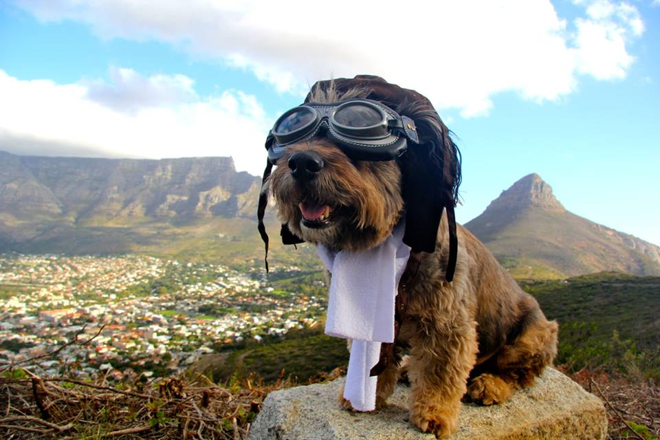 Oscar on Table Top Mountain in Cape Town, South Africa (photo from World Woof Tour Fanclub Facebook page)