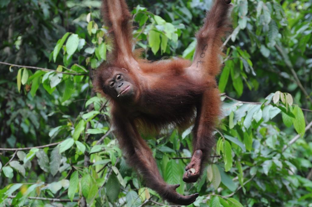 activities in Borneo