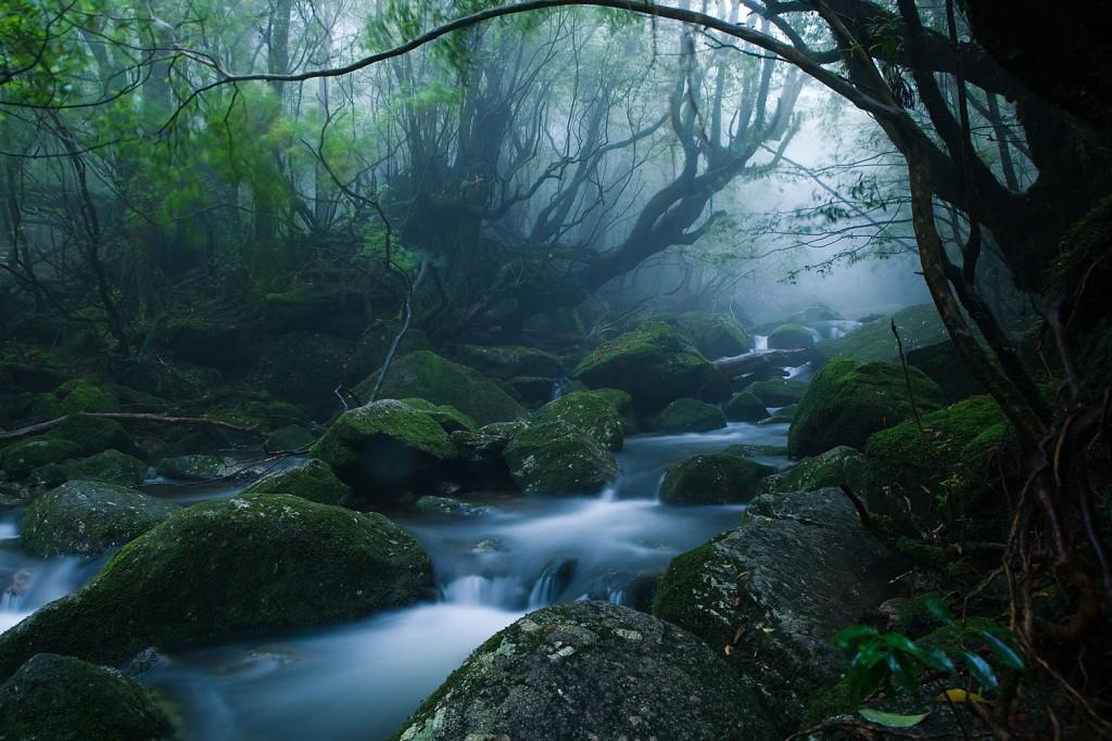 Mononoke forest, Yakushima island (Photo by - Casey Yee)