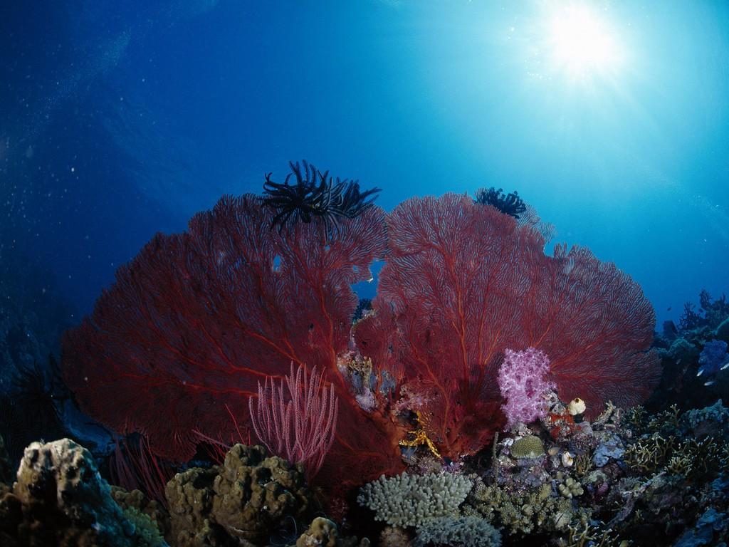 adventures in Papua New Guinea