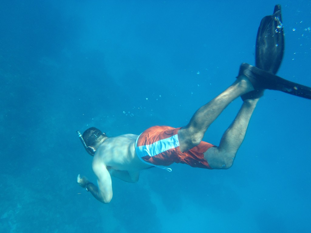 what is free diving