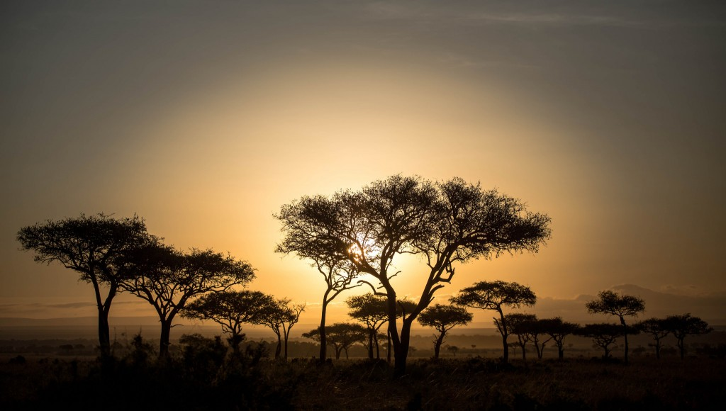 Best Safaris in Southern Africa