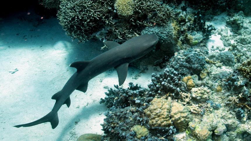 scuba dive sharks
