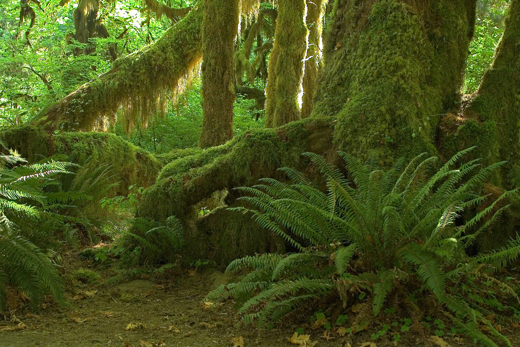 Hoh_Valley,_Olympic_National_Park