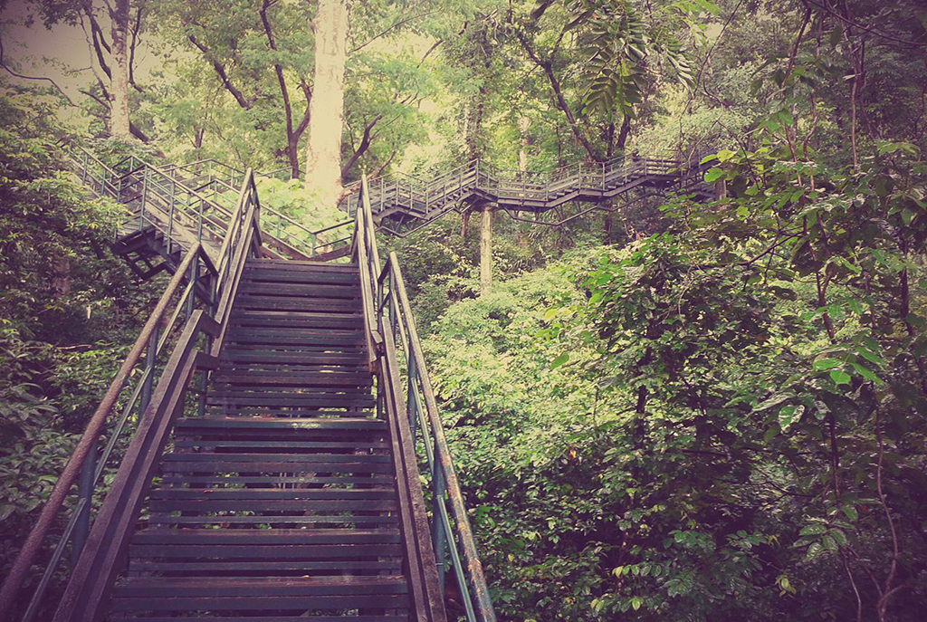 Forest_view_stairs_in_Thenmala_1